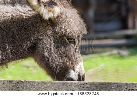 Portrait of a donkey in a wildpark