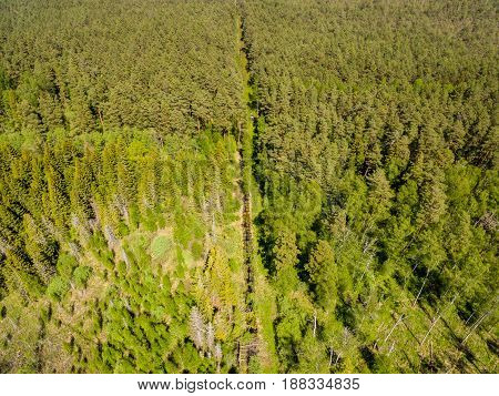 Drone Image. Aerial View Of Rural Area With Forest And Swamp Lake