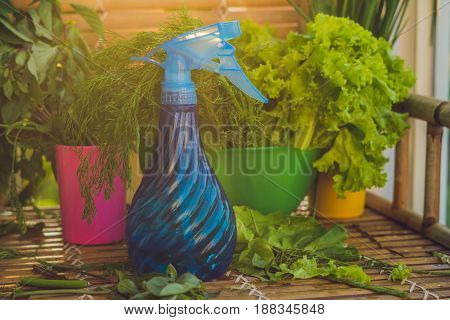 A Variety Of Fresh Organic Herbs On An Old Wooden Background