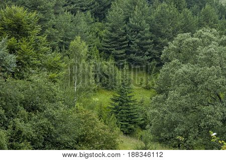 Beautiful landscape of spring nature with green glade and forest,  Plana mountain, Bulgaria