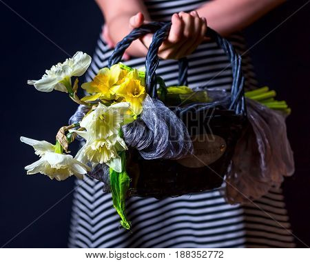 Bouquet of white and yellow daffodils. Flowers in the basket. Dark background. Flowers in a basket in hands. Horizontal image