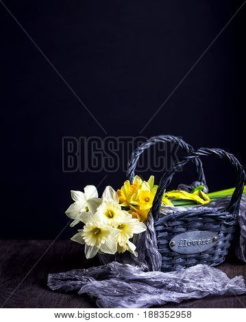 Bouquet of white and yellow daffodils. Flowers in the basket. Dark background. Negative space. Vertical image