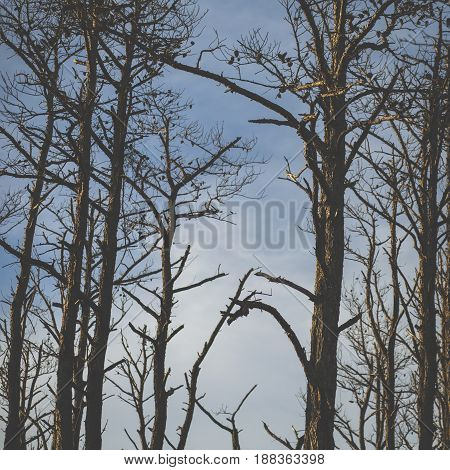 Bare trees during the winter nature background