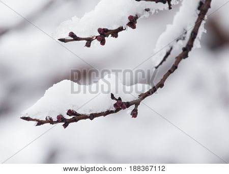 branch of a tree in the snow in the winter .