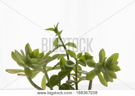 Decorative home plants and flowers for interior or balcony decoration