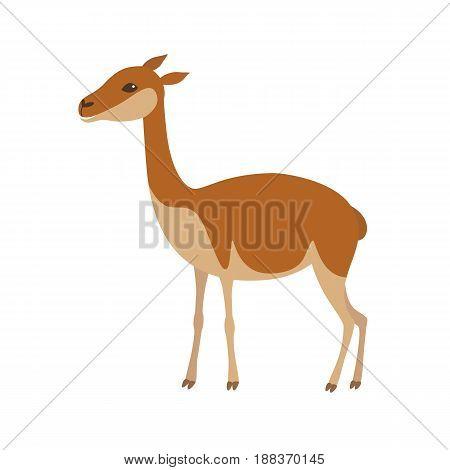 Vicuna animal. Llama vector illustration isolated on white background