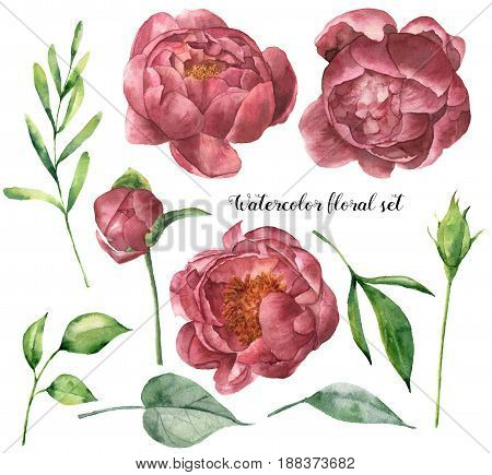 Watercolor floral set with peony and leaves. Hand painted plant elements with flowers and greenery isolated on white background. Botanical illustration for design