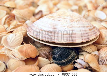 The big sea cockleshell is located against the background of small sea cockleshells.