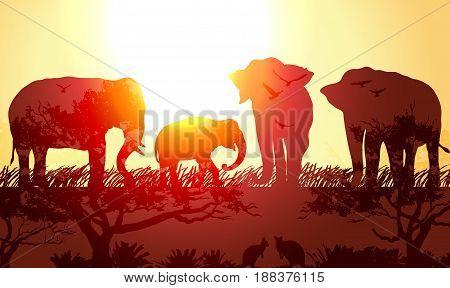 Vector Double exposure, Wild animals Elephants and kangaroos for your design, wildlife concept