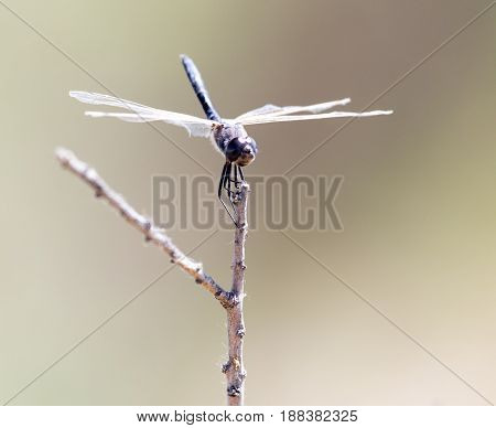 dragonfly on nature . Macro photo in nature