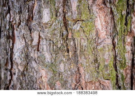 Natural Background. Texture Of The Bark Of A Tree On The Whole Frame. Horizontal Frame