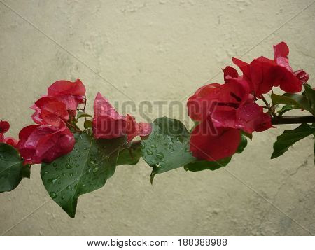 Flowers And Leaves Against Concrete Background