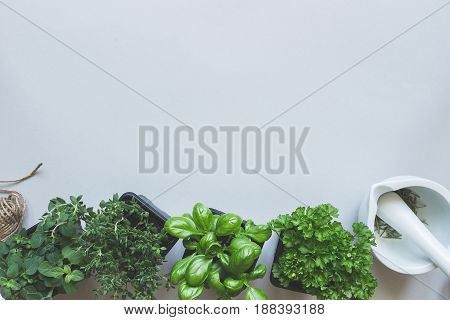 Fresh herbs on the gray background, top view. Rustic background with copy space.