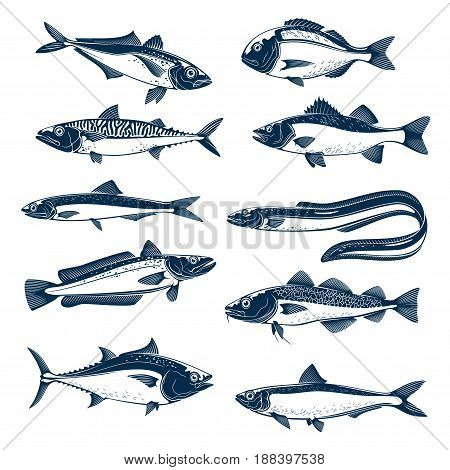 Set of river or sea fish. Salmon and tuna, mackerel and trout, bass, perch and dorado, eel and cod, sardine, herring, sprat isolated blue silhouette for fish market, seafood and fishing theme design