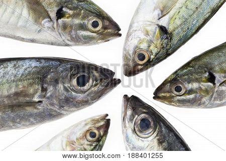 Fresh fish isolated on white background .