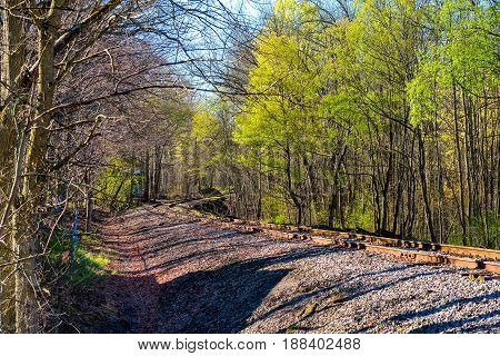 An old railroad track curves through a suburban woodland in early spring sunshine