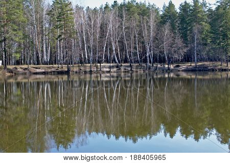 Morning landscape of a forest lake in windless weather.