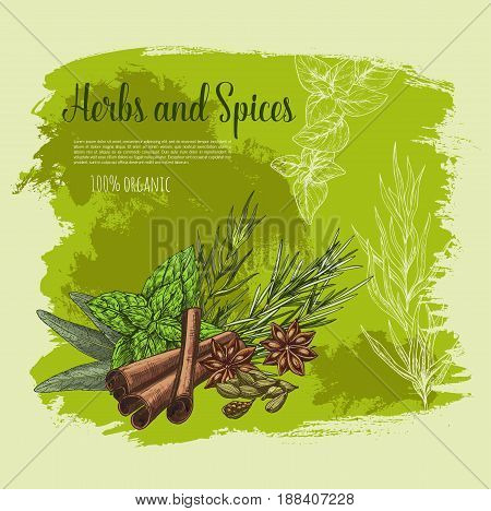 Spices and herbs or herbal seasonings vector poster. Cooking condiments cinnamon and sage or bay leaf, peppermint or rosemary culinary flavoring and anise star or cardamom seeds