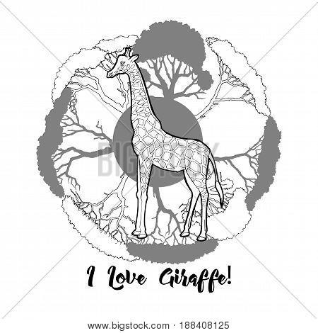 Giraffe and savanna trees print. Hand drawn sketches. Vector Illustration