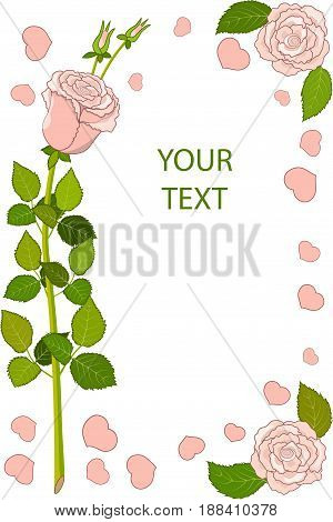 Greeting card three pink roses with leaves and petals, Isolated on white background, vector illustration