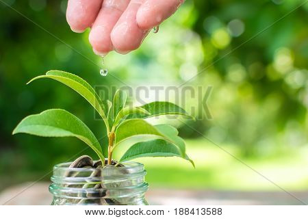 Coin in jar with plant growing Save money and investment concept