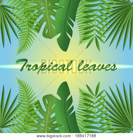 Tropic leaves background. Tropical foliage. Floral design. Summer composition with tropical leaves on a sunny day.