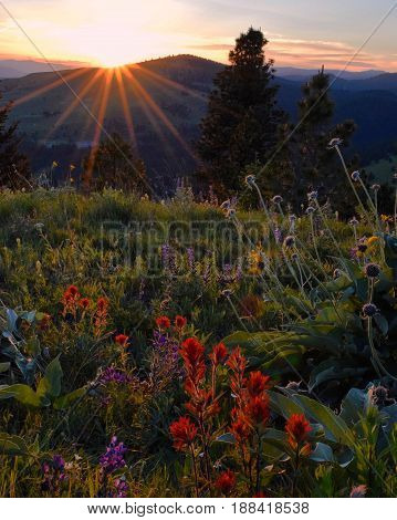 The sun sets over a field of wildflowers in Montana