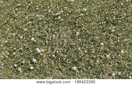 3d illustration of a grass field from top view