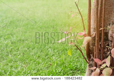 Natural growing trees and lawns in the garden.