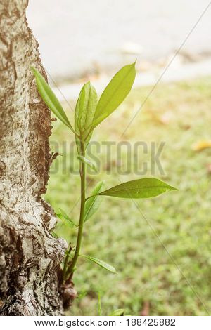The young tree grows on a tree in the garden.