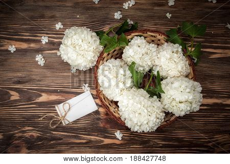 Viburum flowers background on a wooden table. Springtime decoration