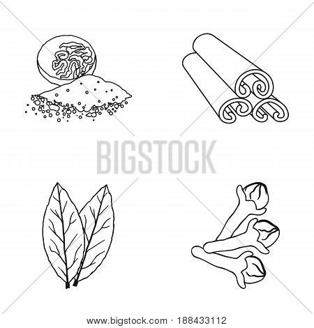 Nutmeg, cinnamon, bay leaves, cloves.Herbs and spices set collection icons in outline style vector symbol stock illustration .