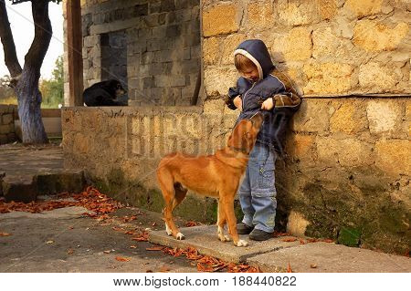 Young boy and homeless dog on autumn street