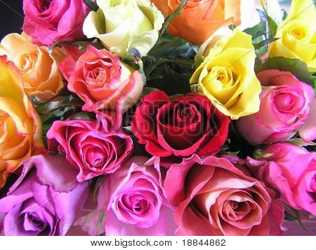 shot of a display of multi colored roses