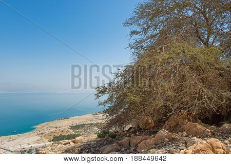 Near The Oasis Of  Ein Gedi In The Background The Dead Sea In Israel