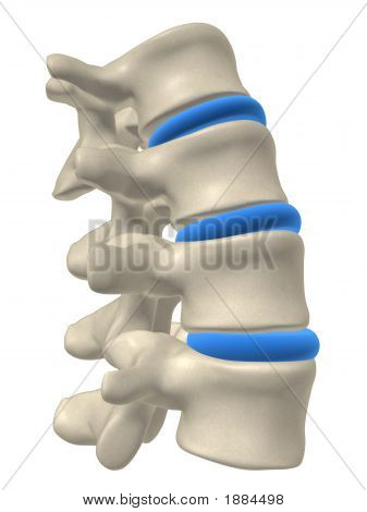 Part Of A Spine