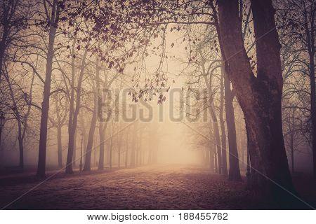 Misty park in Parma Emilia-Romagna Italy. Autumn landscape.