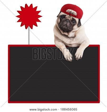 cute pug puppy dog wearing red cap hanging with paws on blank blackboard with sale sign isolated on white background