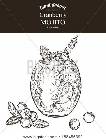 Cranberry mojito. Vector sketch illustration of cocktails. Hand drawn.