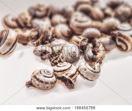 cooked snails escargots placed on white background