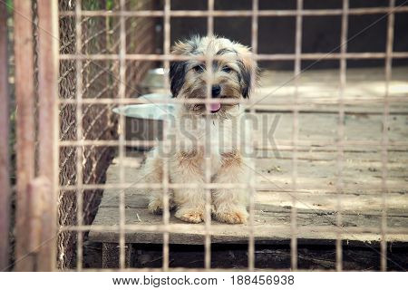 Beautiful sad shaggy puppy in his box waiting for adoption