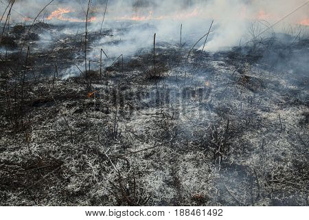 Big fire in the field. Burnt grass and grass still burning.