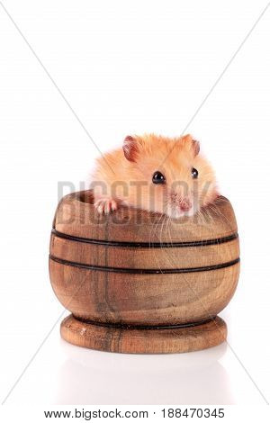 Little funny hamster in a wooden bowl isolated on white background.