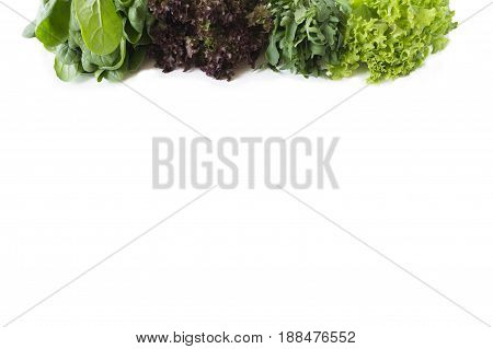 Fresh lettuce at border of image with copy space for text. Top view. spinach and lettuce. Arugula spinach red and green lettuce on a white background.