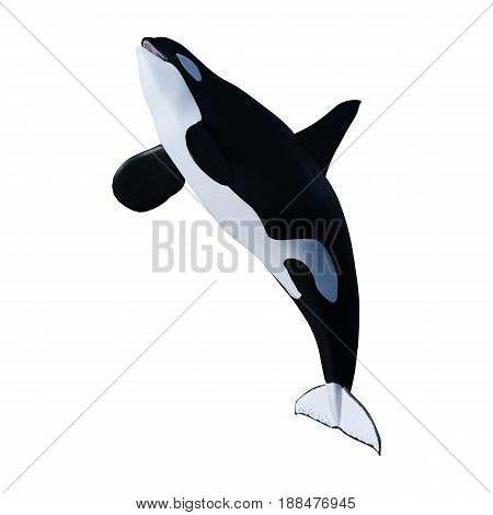 3D Rendering Orca Killer Whale On White