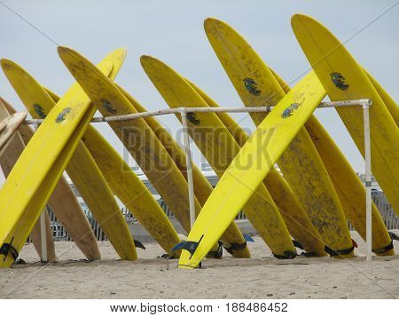 Collection of yellow surf boards standing prone on a beach.