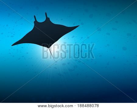 Underwater life. Big manta ray in ocean water.