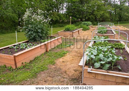 Raised bed gardening is healthy and convenient