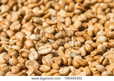 Close up of Coffee Beans Drying with the Sun, ,home made coffee methods