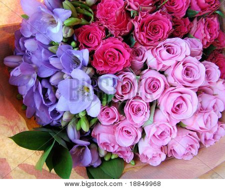 photograph of a bouquet of pink lettuce roses, pink baby roses and purple blue freesia's, still in the wrapper